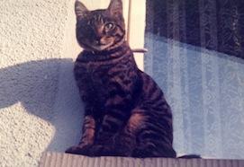 Titi 1986